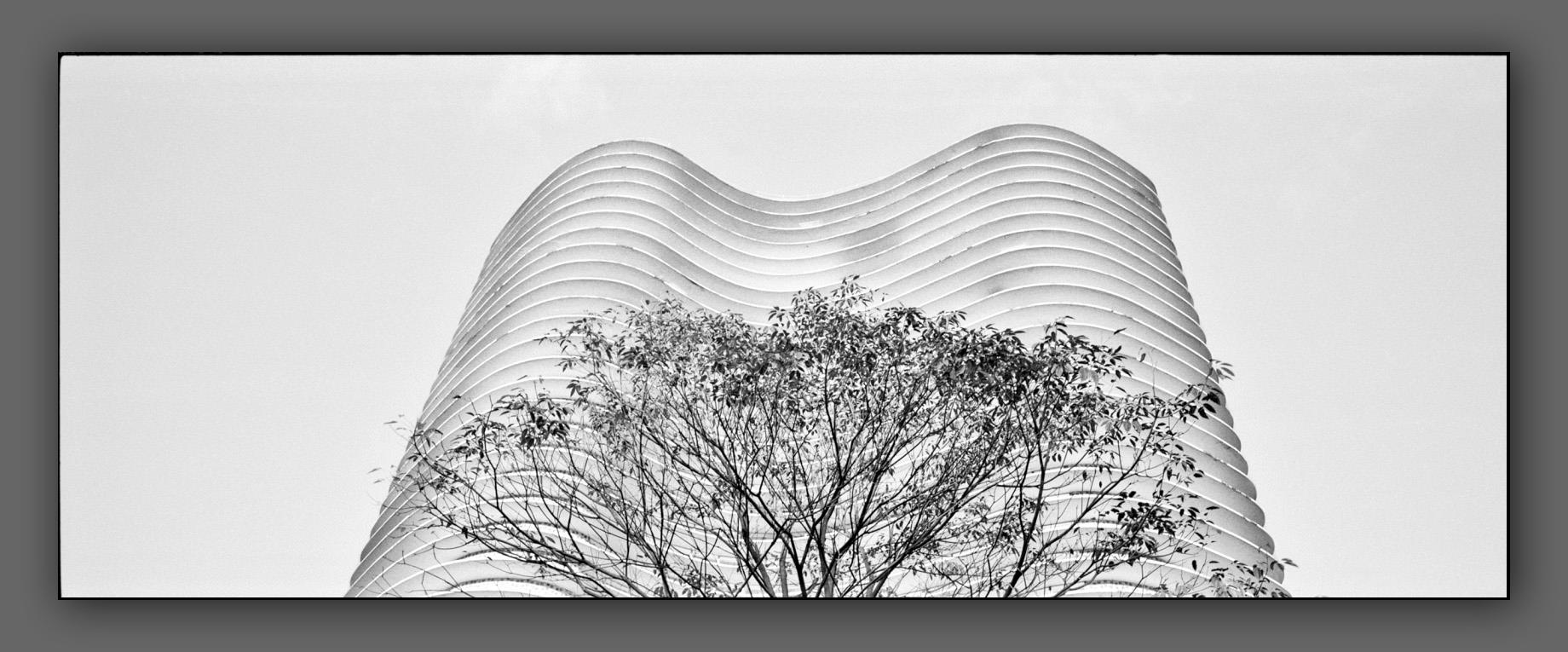 Niemeyer's woman