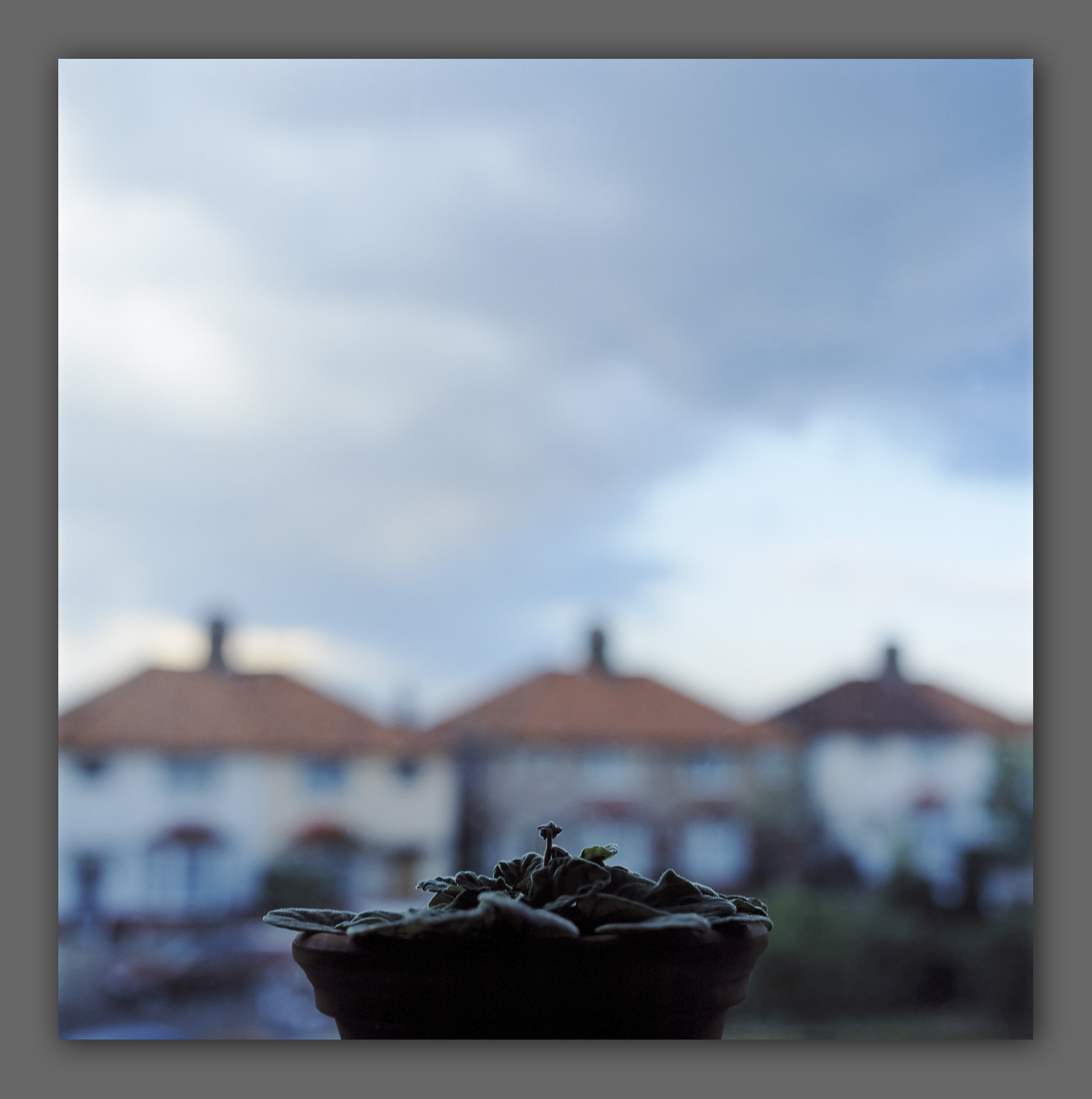 """Window with plant pot - from the """"Home"""" series"""